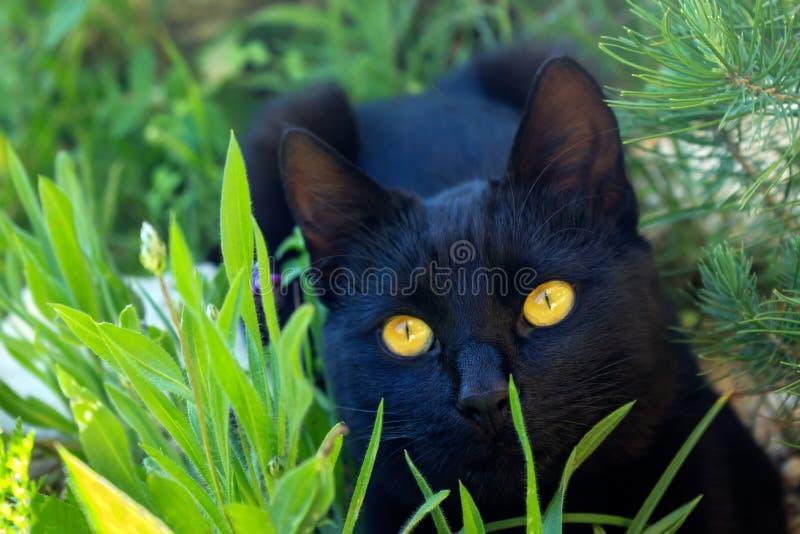 Leuke zwarte katjeszitting in het gras De kat heeft heldere gele ogen stock foto's