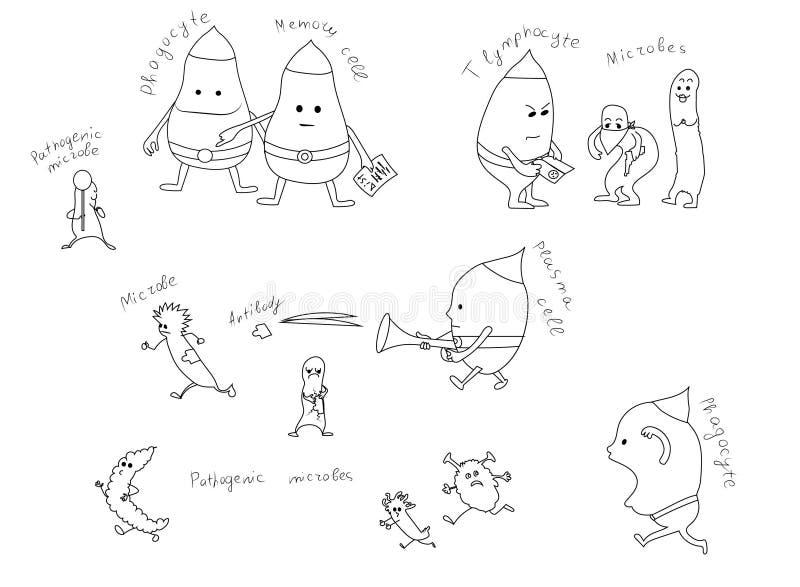 Leukocytes, biali komórka krwi fagocyty i limfocyty, walczą royalty ilustracja