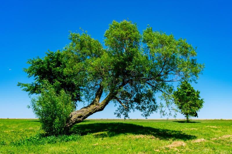 Leunende boom op de kust van Meer Michigan royalty-vrije stock afbeelding