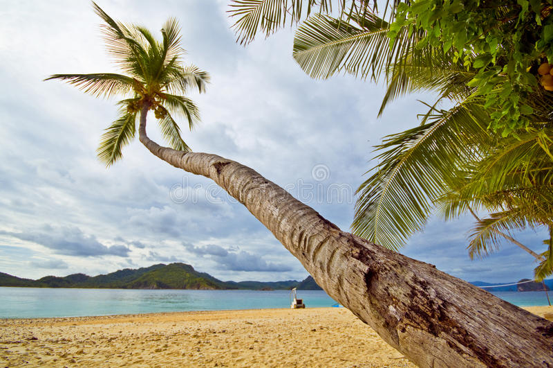 Leunende Palm op een Tropisch Strand stock foto's