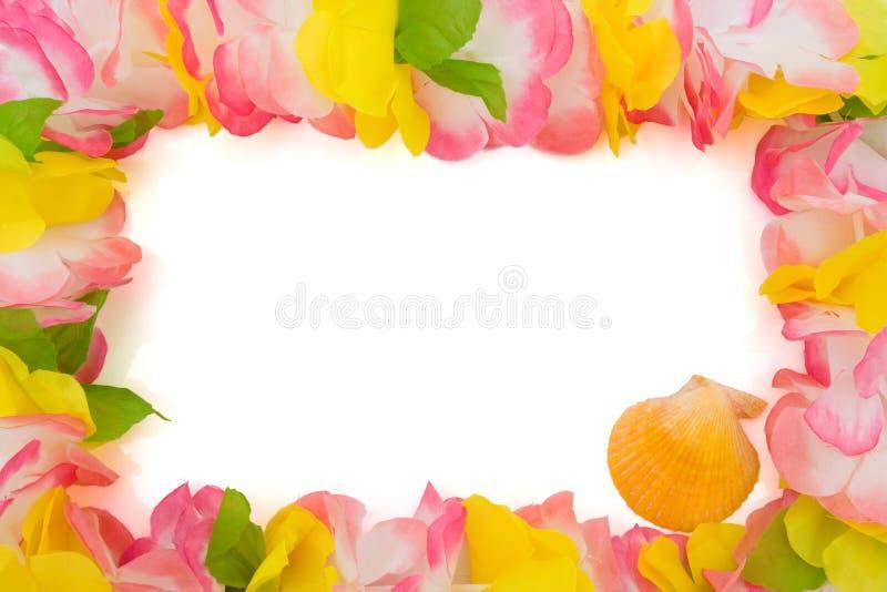 Leus coloridos com seashell imagem de stock