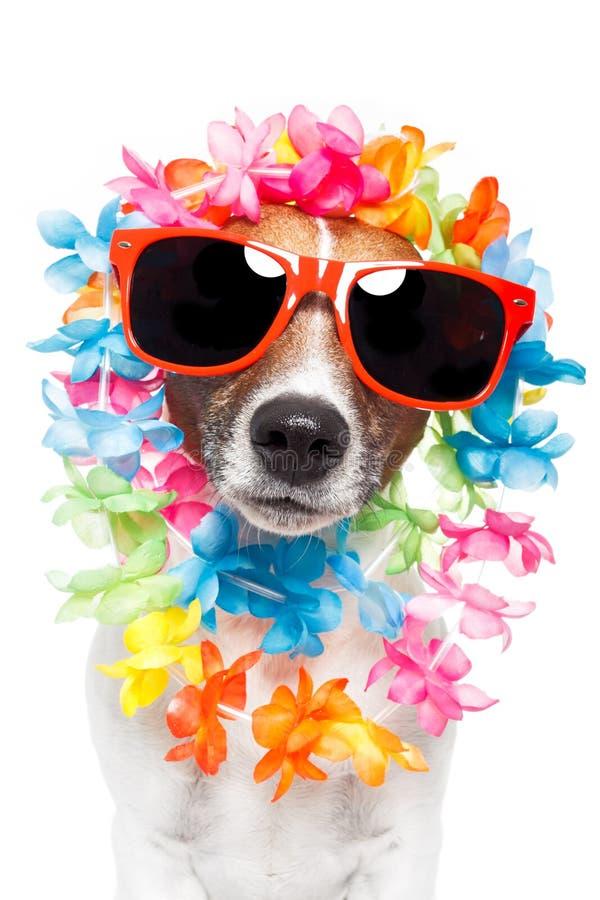 Leus havaianos e óculos de sol do cão engraçado imagens de stock royalty free