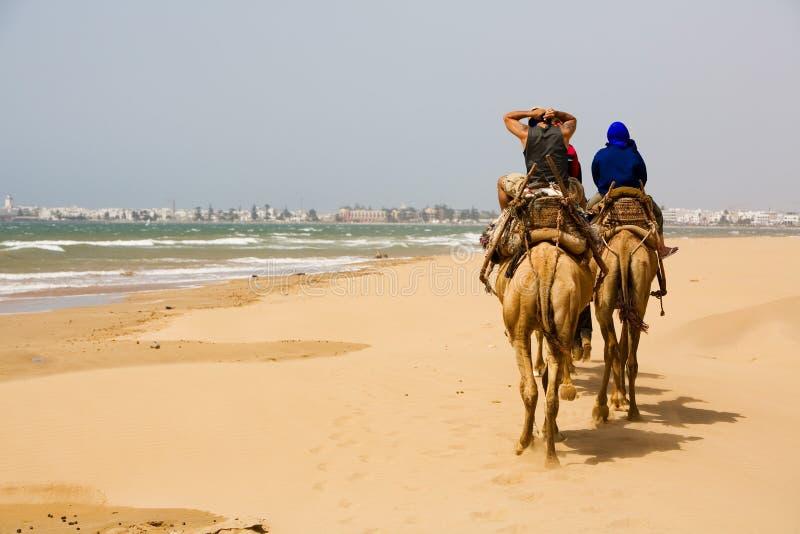 Leute auf dem Kamel am Strand nahe Essaouira lizenzfreies stockfoto