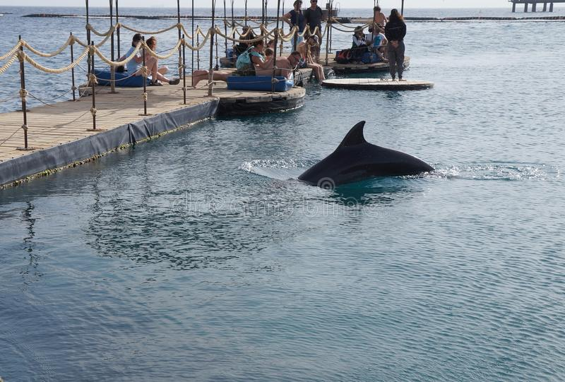 Leute beobachten Schwimmendelphin, Elat lizenzfreie stockfotografie