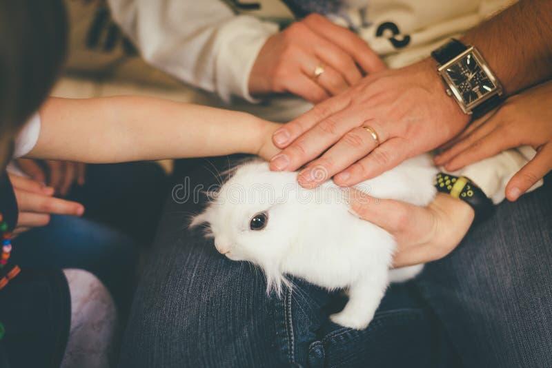 Leute berühren weißes Haustierkaninchen lizenzfreies stockbild