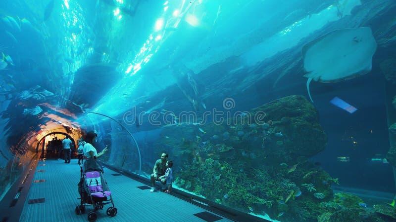 Leute bewundern das Meeresflora und -fauna im Glastunnel des Aquariums in Dubai-Mall stockfotografie