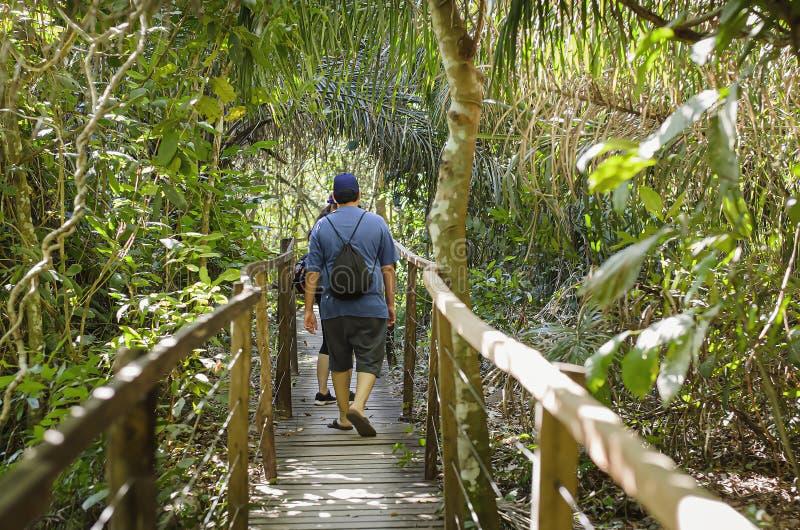 Leute, die auf einen hölzernen Fußweg auf dem Wald gehen lizenzfreies stockbild