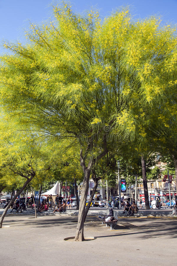 Leute, die in den blühenden Bäumen Ratama des Schattens stillstehen stockfotos