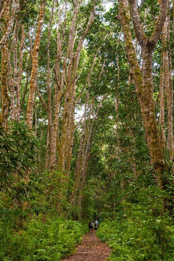 Leute, die in einen Wald gehen stockfotografie