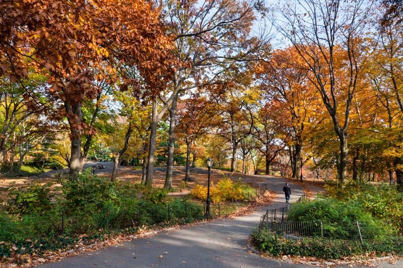 Leute, die einen Weg im Central Park New York City genießen stockbilder