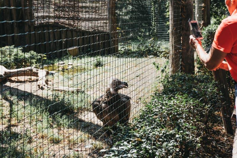 Leute, die Fotos eines Geiers hinter das Einschließungsnetz in Prag-Zoo, Tschechische Republik machen lizenzfreie stockbilder