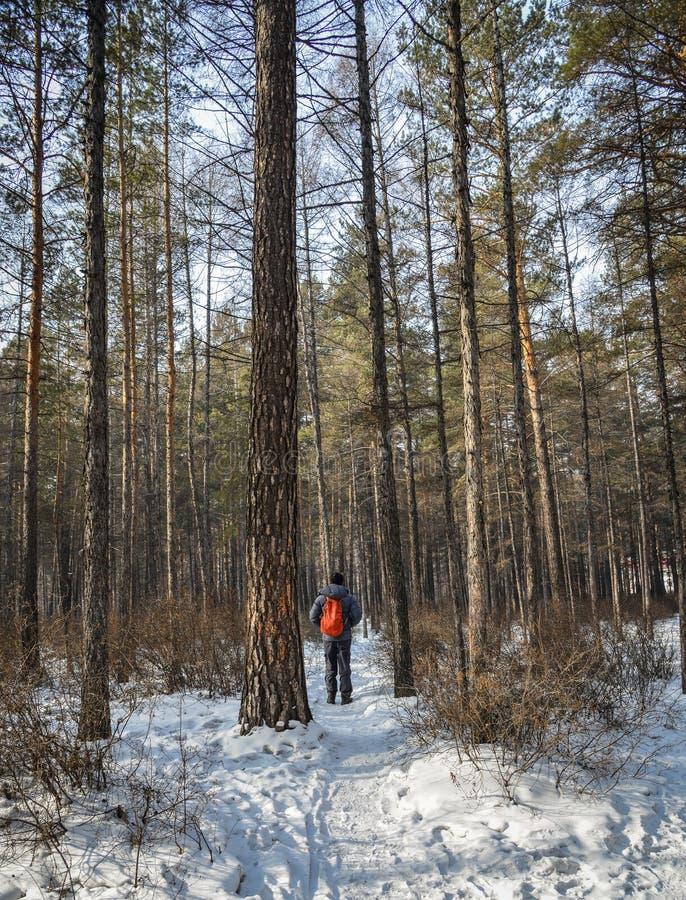 Leute, die am tiefen Wald im Winter gehen stockfoto
