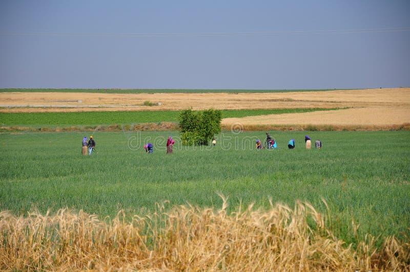 Leute am Feld stockbild