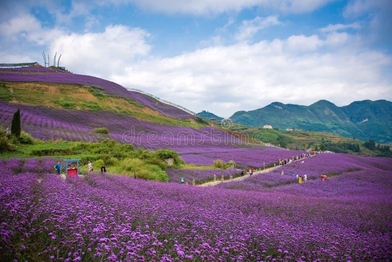 Leute im Lavendel-Feld-Park stockfotografie