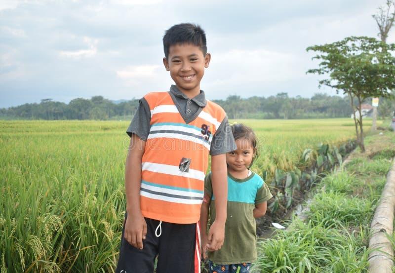Leute, Landwirtschaft, Anlage, Paddy Field stockfotografie