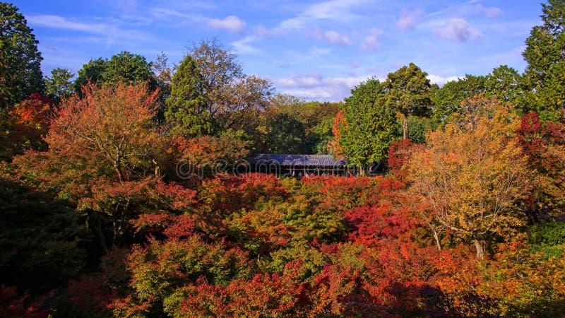 Leutebesuch tofukuji Tempel im Herbst lizenzfreie stockfotos