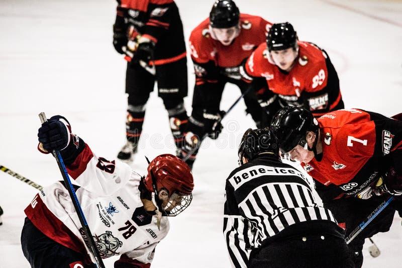 Ice hockey BeNe League. Leuven, October 7th 2019.  Ice hockey BeNe League Belgian Elite League:  Chiefs Leuven vs Liege Bulldogs. Liege Bulldogs win with a royalty free stock photography