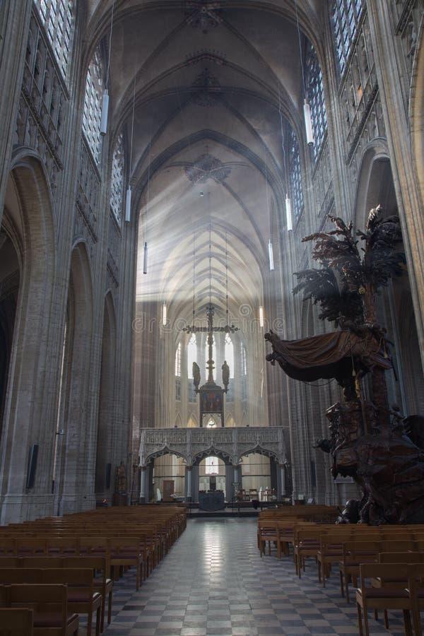 Leuven - skepp av St Peters den gotiska domkyrkan och strålar av morgonsolen royaltyfria foton