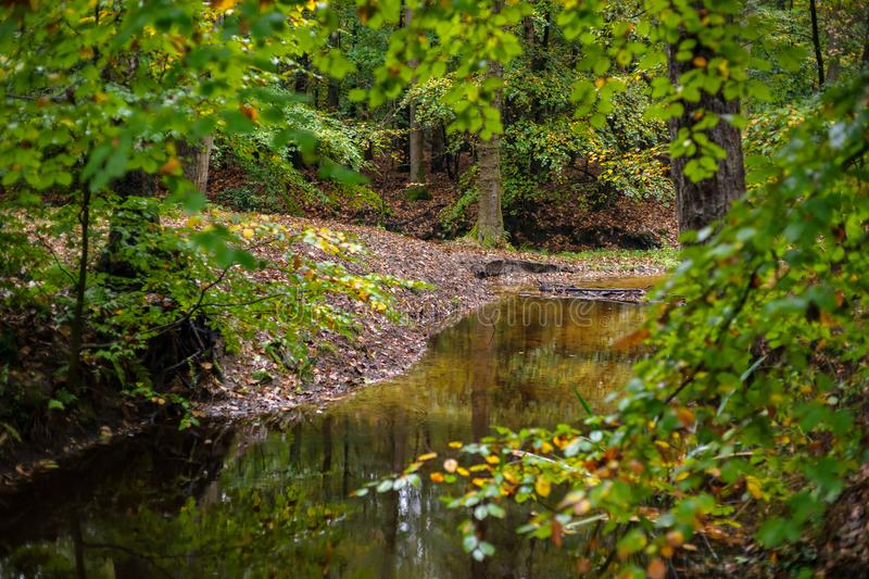 Bright forest river at fall. The leuvenumse creek is one of the few natural streams in Dutch nature. This brook is the longest of the Veluwe and is a beautiful stock images