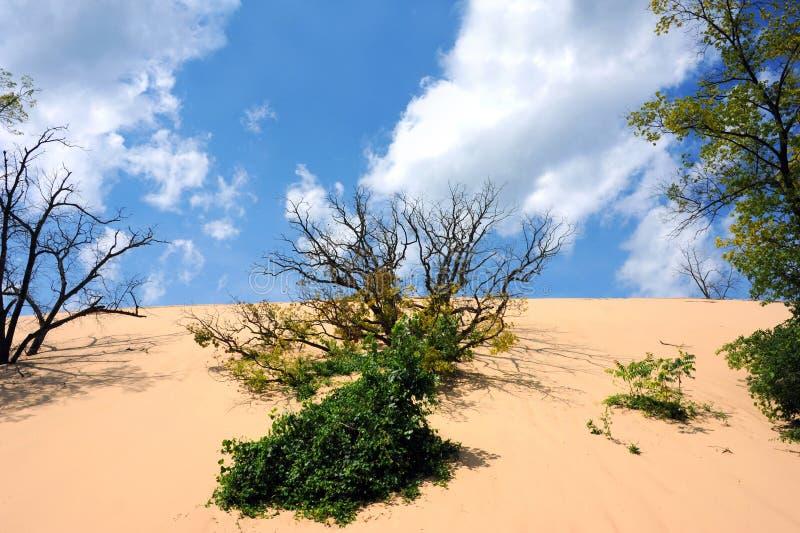 Leva och flytta Sand Dune arkivfoto