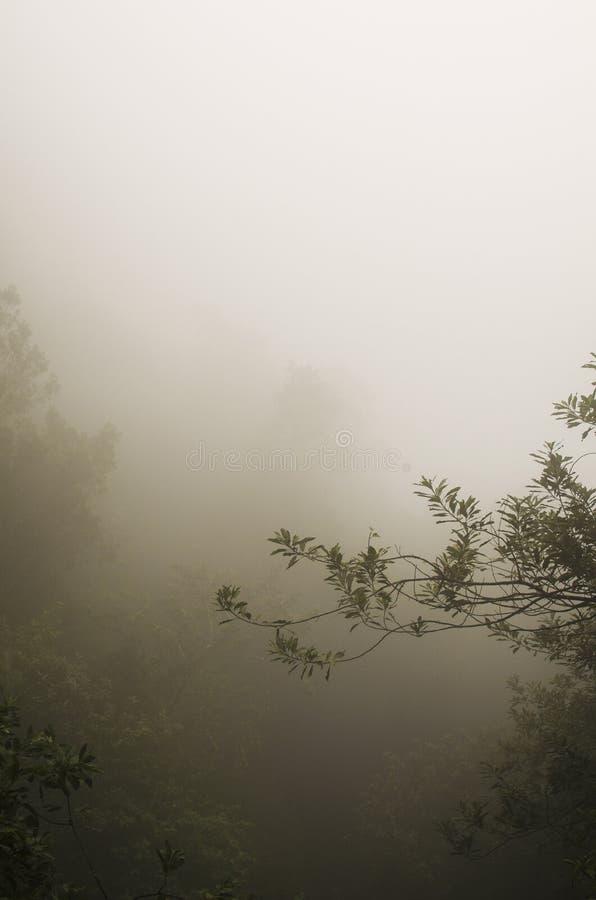 Levada в облаках Мадейре стоковые фотографии rf