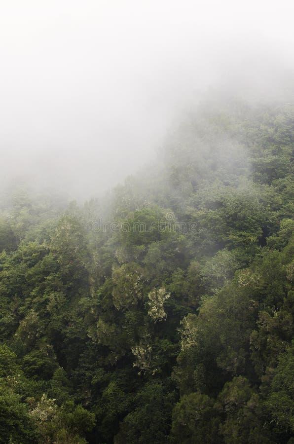 Levada в облаках Мадейре стоковое изображение rf