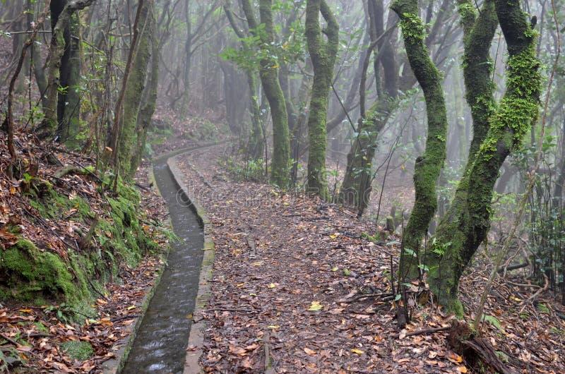 Levada dos Cedros: Fanal Ribeira da Janela, typ irygacyjni kanały, madera, Portugalia obraz royalty free