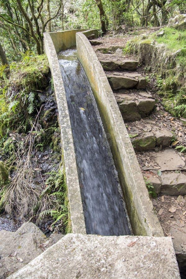 Levada font Poco Bezerro, l'eau sauvage, sentier de randonnée touristique, Ribeiro Frio, île de la Madère, Portugal photographie stock libre de droits