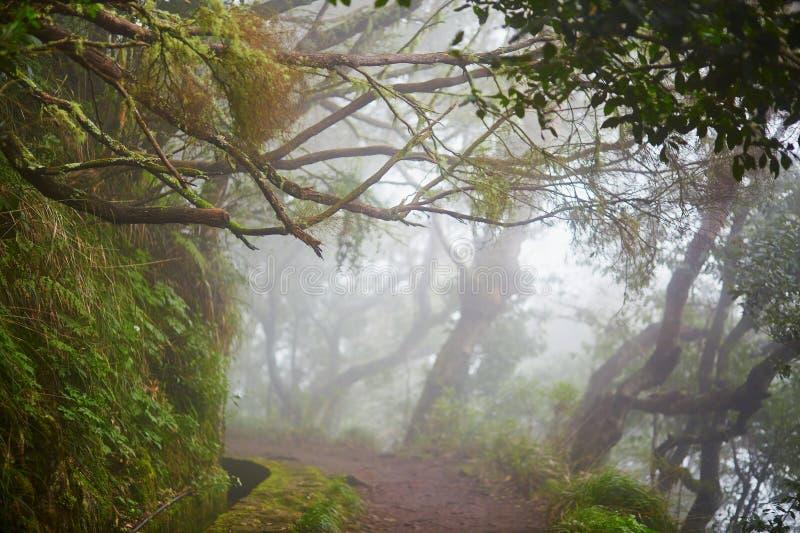 Levada går till och med lagerskog på madeiraön, Portugal royaltyfri fotografi