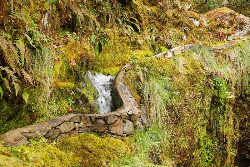 Levada, Madeira, Portugal royalty free stock image