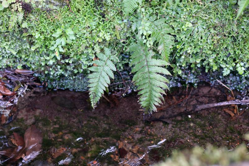 Levada-Wasser und Grünpflanzen, die nahe bei dem Levada in Madeira wachsen stockfotos