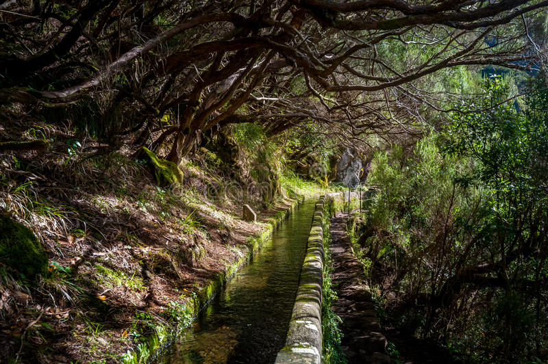 Levada water stream in Rabacal hiking route, Madeira island. stock photos