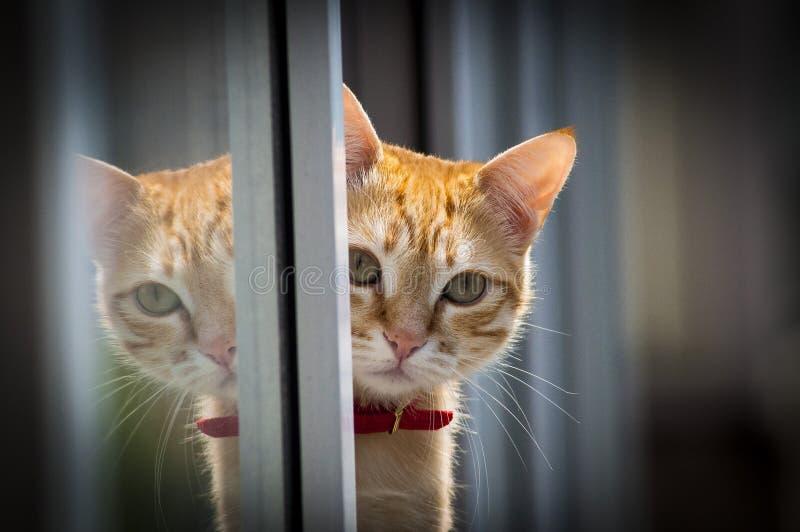 Levantamento do gato imagem de stock royalty free