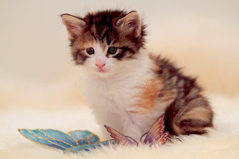 Levantamento norueguês pequeno do gatinho do gato da floresta imagem de stock