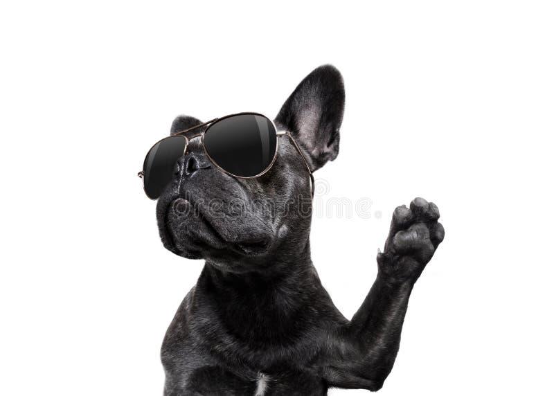 Levantando o cão com óculos de sol altamente cinco fotos de stock