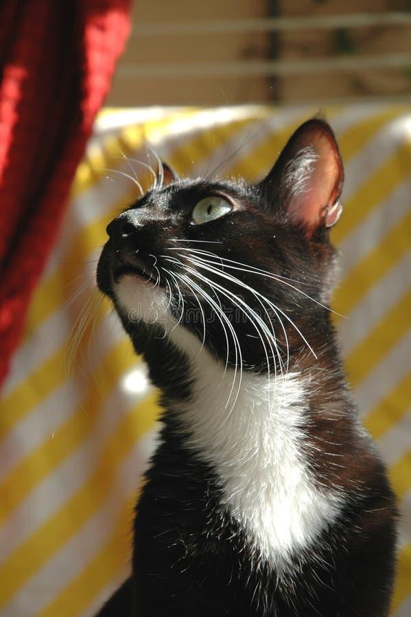 Download Levantando o gato imagem de stock. Imagem de preto, posing - 62699