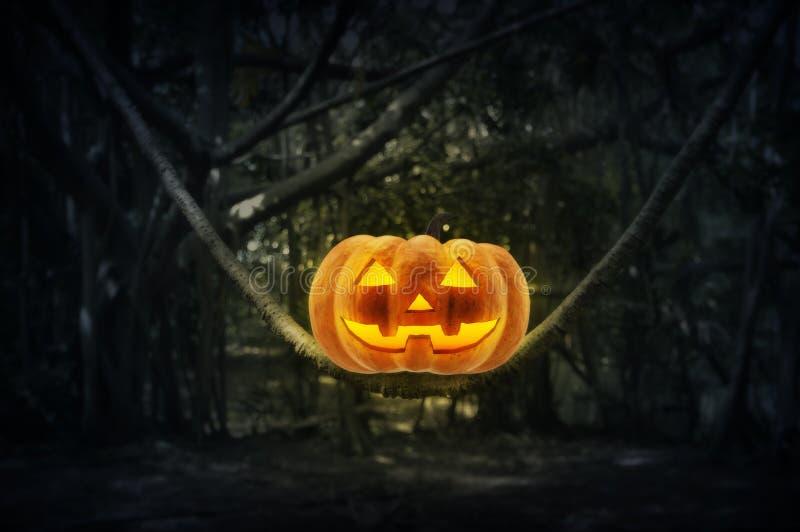 Levante la calabaza de la linterna de O en árbol del tronco en bosque místico en la noche, foto de archivo