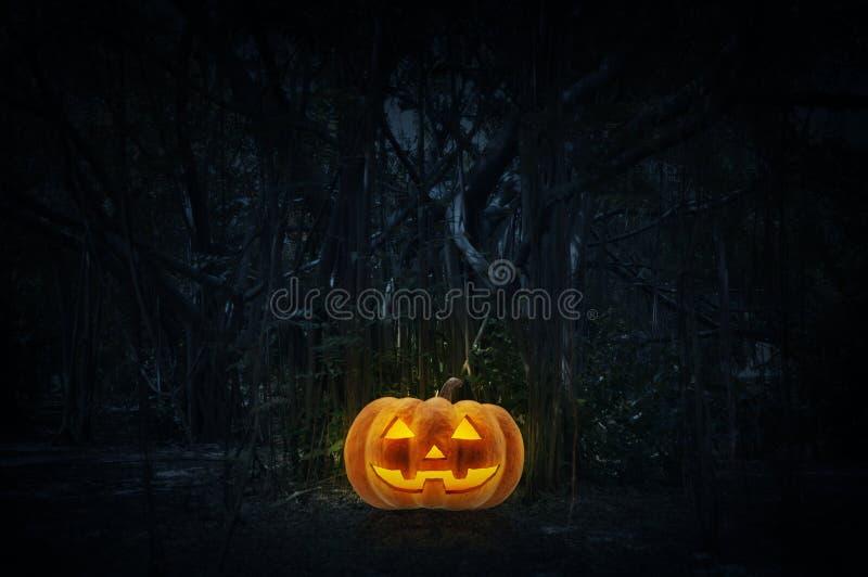 Levante la calabaza de la linterna de O en hierba sobre bosque fantasmagórico en la noche foto de archivo