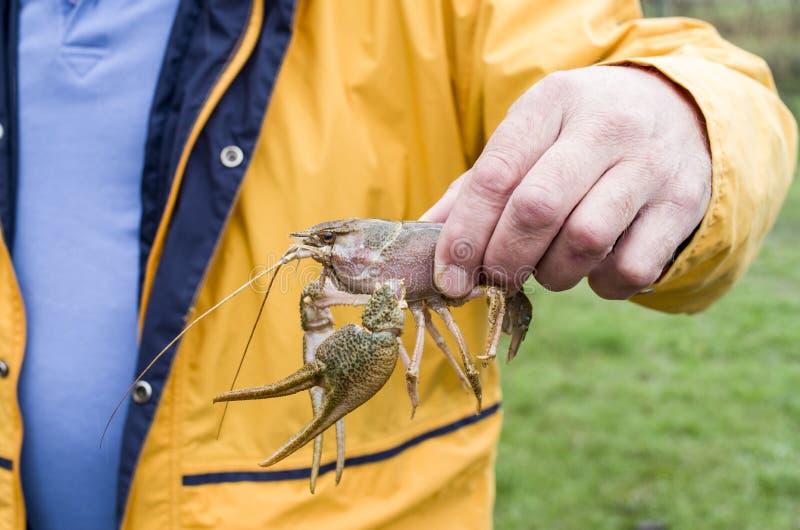 Levende rivierkreeften in mannelijke handclose-up stock fotografie