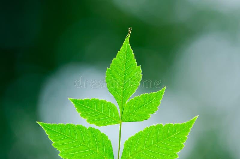 Levendige bladeren stock afbeeldingen