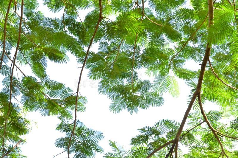 Levendige groene bladeren op witte achtergrond royalty-vrije stock foto's