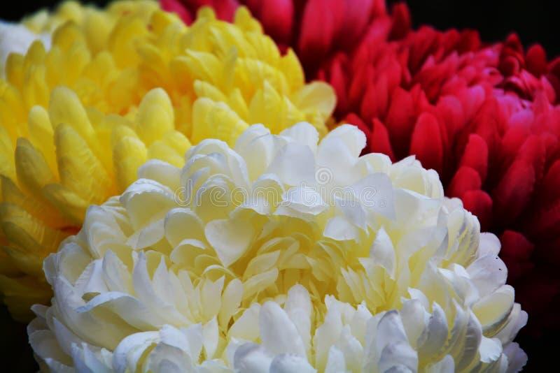 Levendige roze witte violette gele bloemblaadjes en bloemen, natuurlijke achtergrond, tuinschoonheid stock fotografie