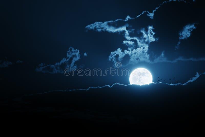 Lever de la lune très lumineuse au-dessus de banque de nuage avec la volée des oiseaux photo libre de droits