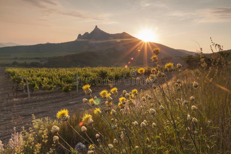 Lever de soleil étonnant au-dessus des vignobles image stock