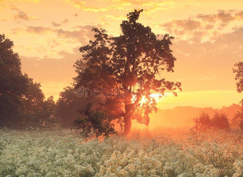 Lever de soleil étonnant au-dessus de pré dans la fleur photographie stock libre de droits