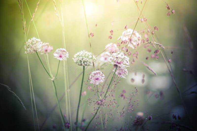 Lever de soleil étonnant au pré d'été avec des wildflowers image stock