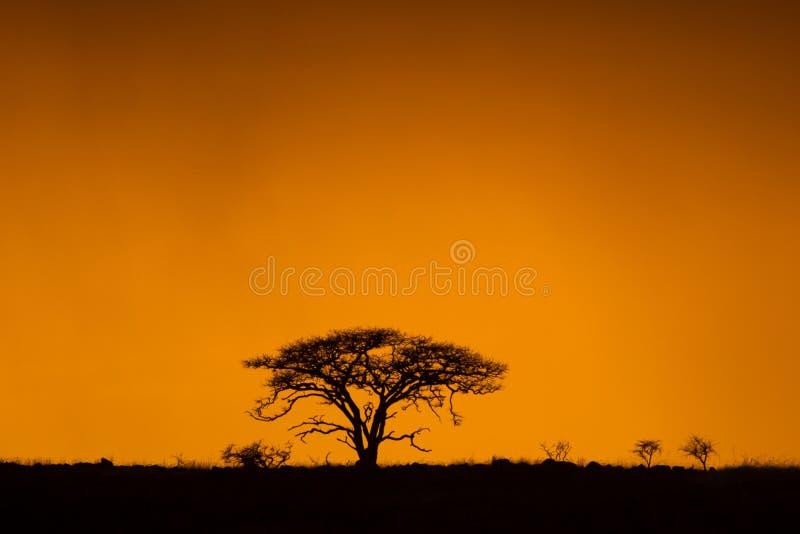 Lever de soleil africain coloré Afrique du Sud photographie stock libre de droits