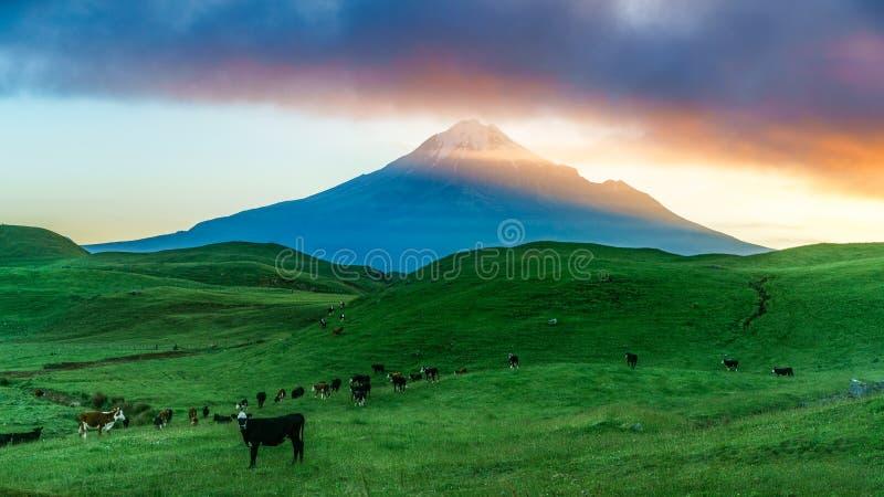 Lever de soleil au-dessus d'herbe verte, taranaki de mt de volcan de cône, Nouvelle Zélande photographie stock