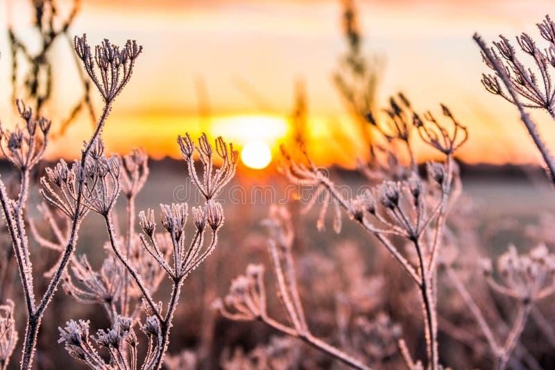 Lever de soleil au-dessus d'un champ gelé photos libres de droits