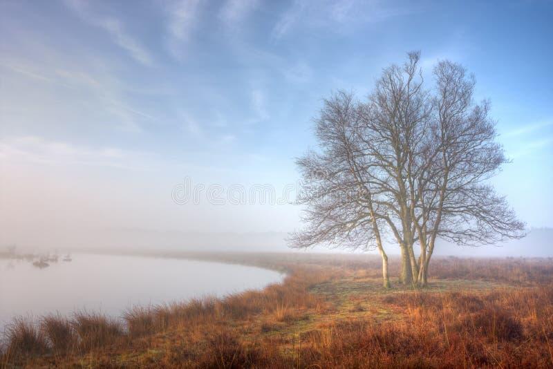 Lever de soleil au-dessus d'un lac brumeux photographie stock